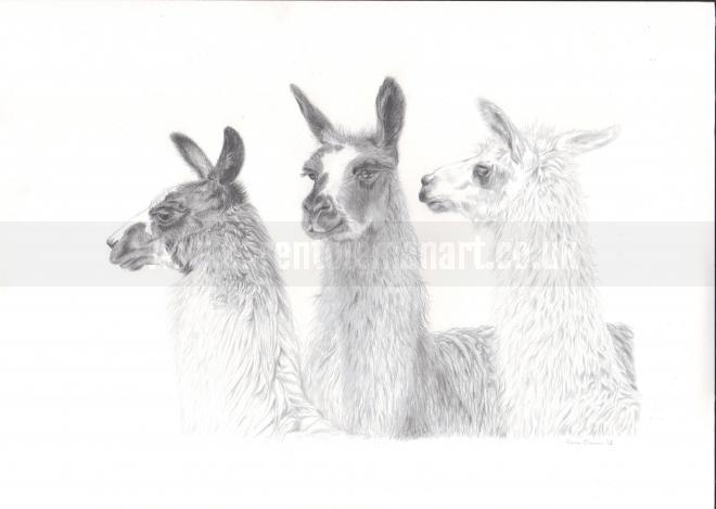 Photo of artwork: Llama parliament