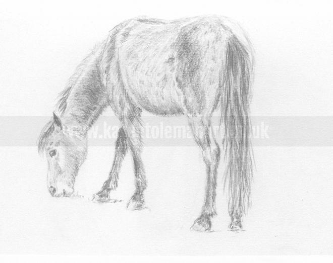 Photo of artwork: New Forest Pony